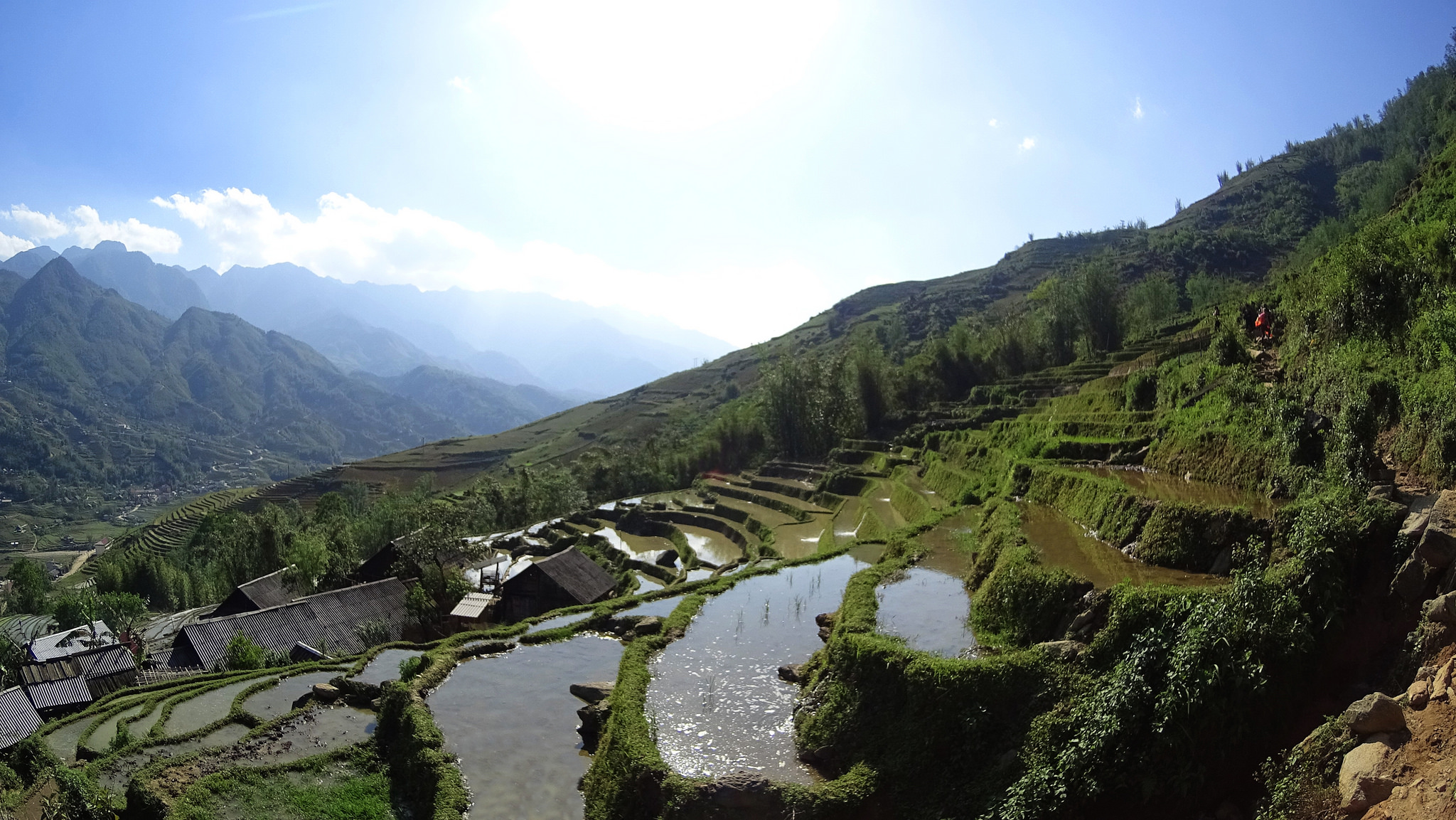Rice paddies at Sapa