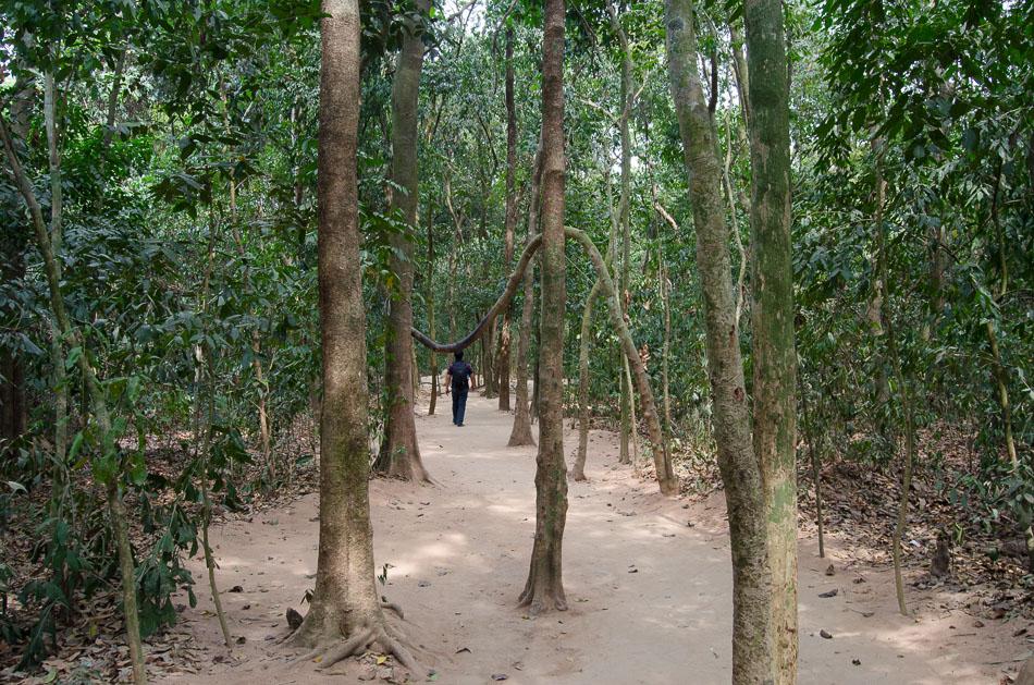 Jungle on Ben Duoc